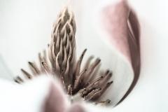 Ellar.magnolia