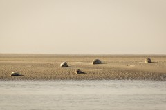CFE-zeehonden-IMG_0009