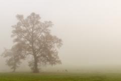 Mist in het Pajottenland